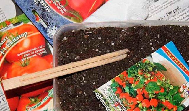 Как вырастить рассаду помидоров дома (пошаговая инструкция), фото, видео, когда сеять томаты на рассаду в 2019 году