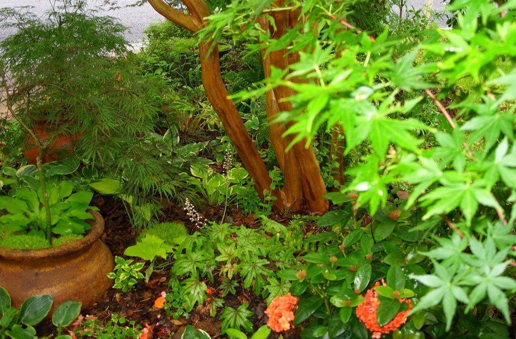 Гейхерелла в садовой композиции