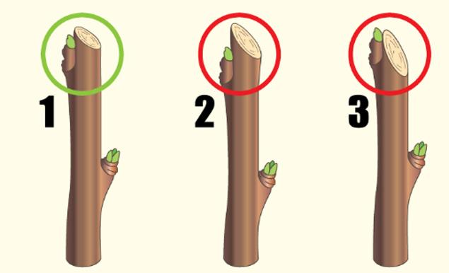 Как обрезать яблоню правильно: видео и схемы обрезки по годам