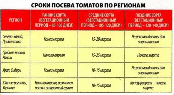 Как сажать томаты на рассаду: правила посева в домашних условиях