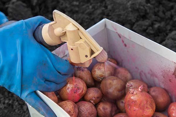 Календарь посадки картофеля в апреле-мае 2019 года