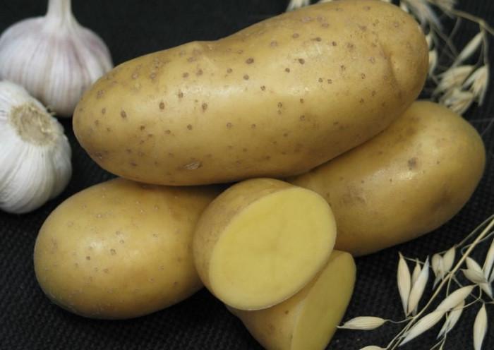 Лучшие сорта картофеля: описание, отзывы, фото, урожайность