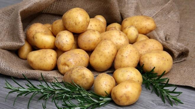 Сорт картофеля гала характеристика отзывы фото