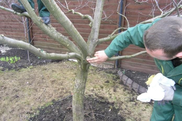 Обрезка яблонь весной - видео для начинающих