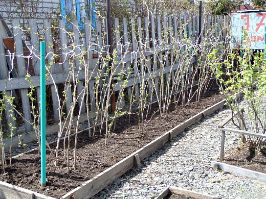 Подкормка малины весной, когда и как это правильно делать, в том числе без химии