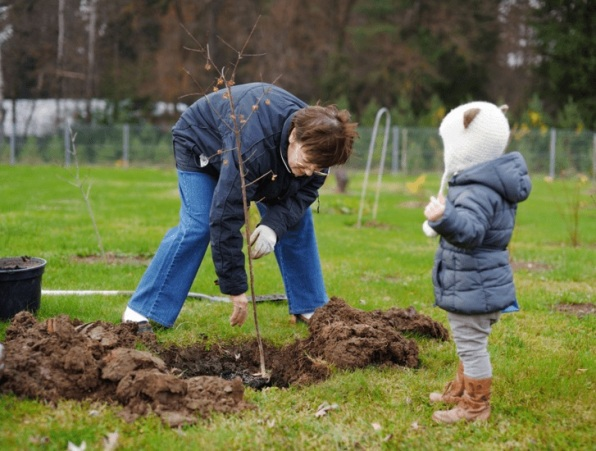Посадка вишни весной и осенью: как сажать правильно