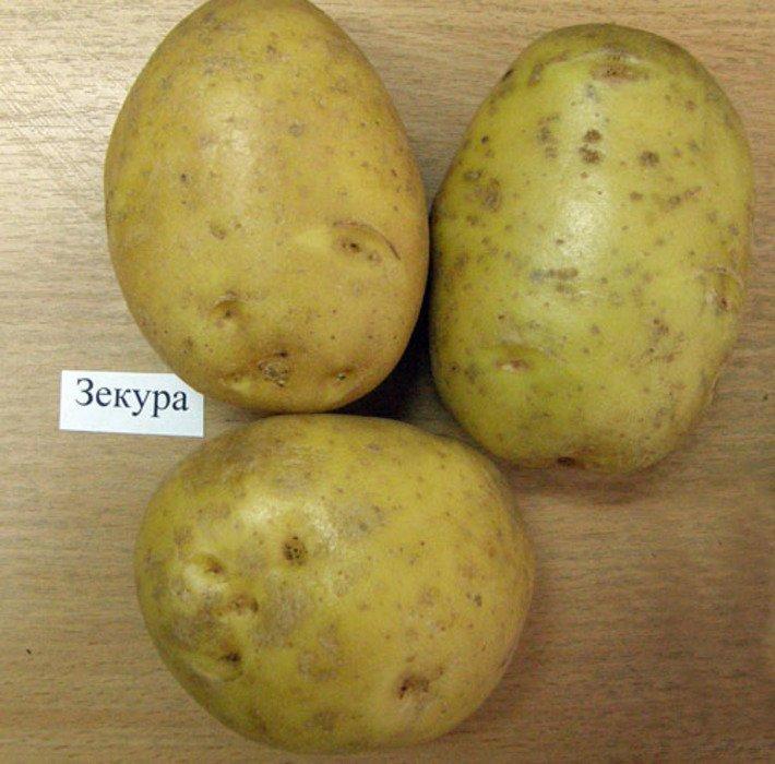 Самый ранний сорт картофеля