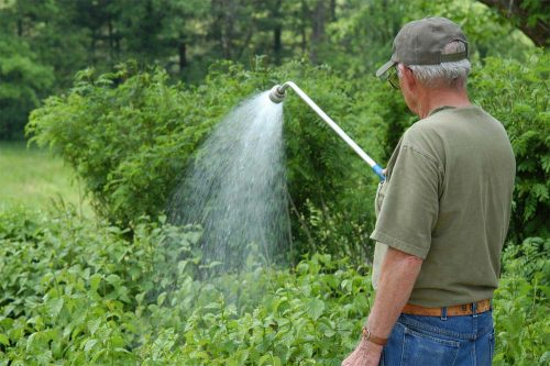 Весенний уход за малиной: сроки работ, обрезка, подвязка