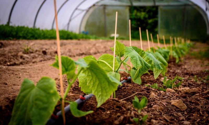 Чем поливать огурцы для хорошего урожая: народные средства, что им полезно и вредно