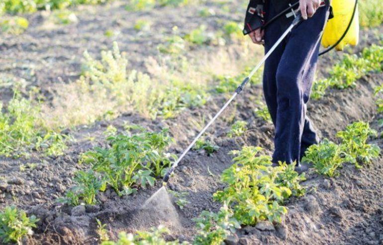 Эффективные методы и препараты для борьбы с колорадским жуком на картофеле, современные методы 2019