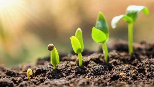 Лунный календарь на март 2020 года для садоводов и огородников Подмосковья